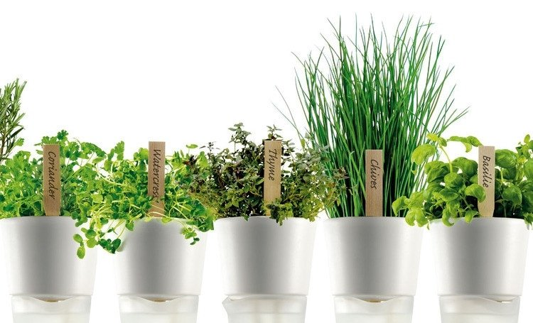 Amenager son jardin a prix mini c 39 est possible - Planter persil en pot ...